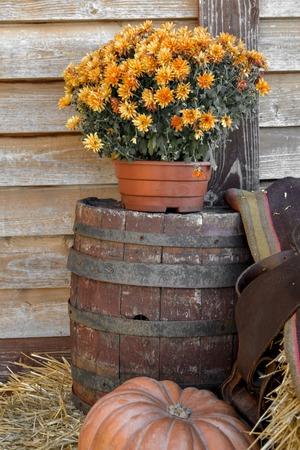 Red pumpkin alone and orange flowers, Halloween concept, autumn still life in orange shades. 版權商用圖片