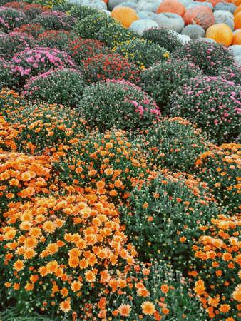 orange yellow and purple flower blooming in garden