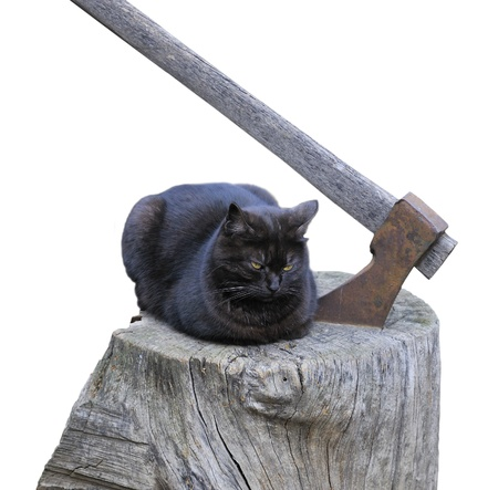 failed politics: Gloomy scene from urban life - black cat with yellow eyes on piece of wood and axe beside