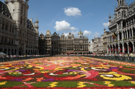 brussels: BRUSSELS - AUGUST 16  Flower carpet - 2008 in Brussels Grand-Place, Belgium  This year the carpet was made from begonia flowers Editorial