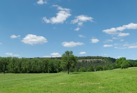 walloon: Landscape of Walloon, Belgium - green hills and forest in clear summer day  Stock Photo