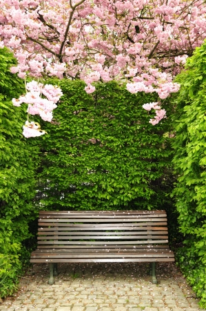 Wooden garden bench in park surrounded by green and pink photo