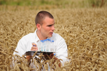 Young agronomist collecting samples in the wheat field