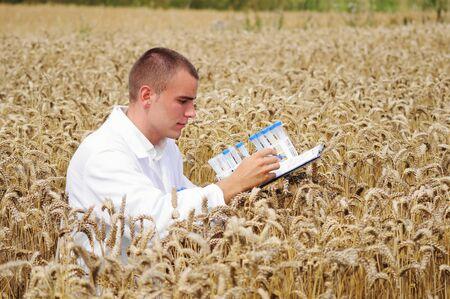investigador cientifico: Especialista joven comprobar los resultados de su experimento en el campo de trigo