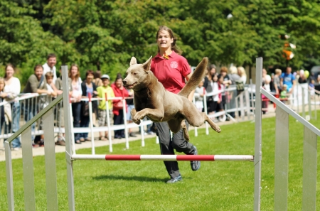 BRUSSELS, BELGIUM - JULY 21  Participant of Agility competitions by Club Cynologique  Editorial