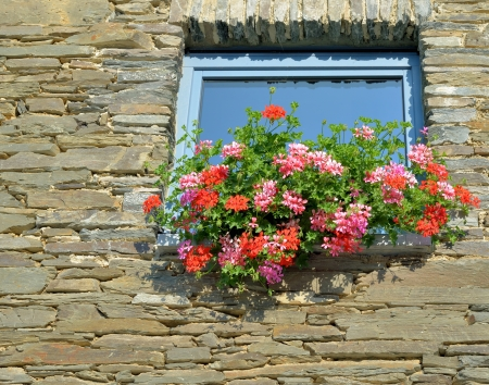 walloon: Typical walloon window and a wall decorated with flowers of geranium in sunny day Stock Photo