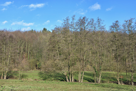 wallonie: Landscape with forest in clear winter day in Wallonie, province Liege in Belgium Stock Photo