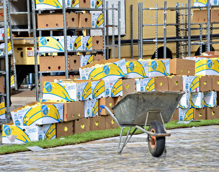 bruxelles: Brussels, Belgium - August 14 2014: Prepared for the Flower Carpet creation one million of begonias in boxes on Grand Place