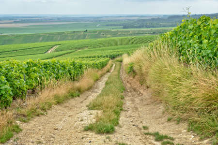 Village road between vineyards in Champagne-Ardenne, France Stock Photo