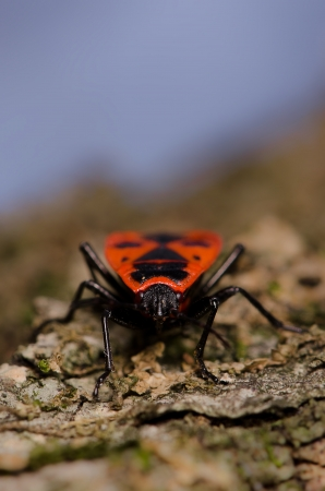 Bug with red and black signs on its back photo