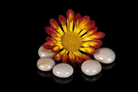 Little flower and small stones against black background Stock Photo