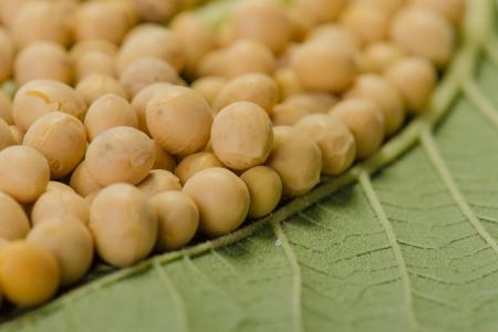 soja: F�ves de soja sur une feuille verte