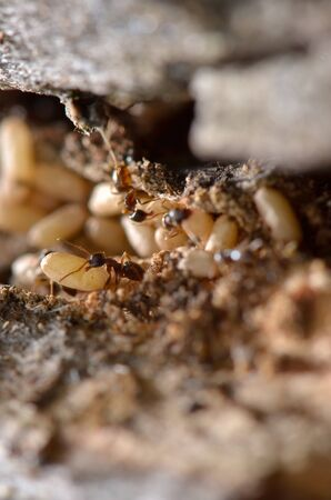 View from an ant hill close up photo