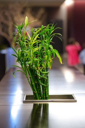Bamboo arrangement for wooden table  photo