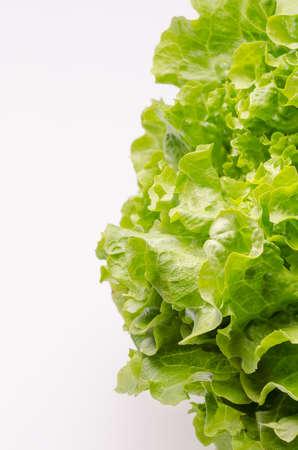 green leafy vegetables: Fresh salad against white background  Stock Photo