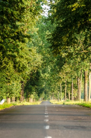 Road and trees in a summer day  Stock Photo