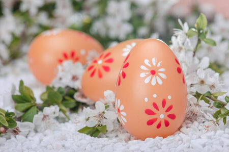 Painted eggs on white  surface with plum cherry flowers Stock Photo - 27145208