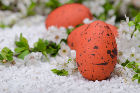 Painted eggs on white  surface with plum cherry flowers Stock Photo - 27145212