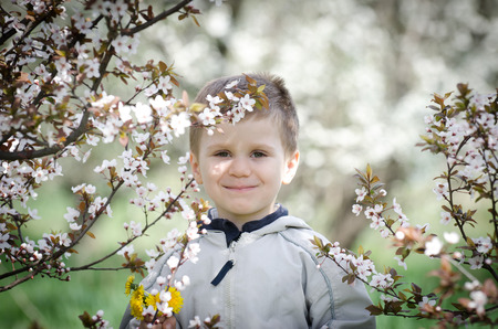 Happy little boy and blossom plum cherry   flowers in a spring day Stock Photo