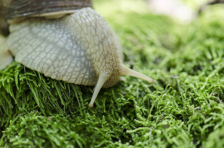 yellow banded: Snail on forest moss against beautiful forest bokeh background