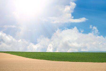 blown away: Beautiful wheat and corn  field in the summer sun