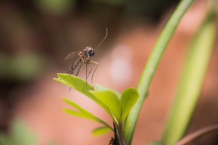 Moustique sur une feuille sur le fond de la forêt naturelle