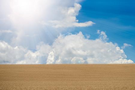 blown away: Beautiful wheat field in the summer sun