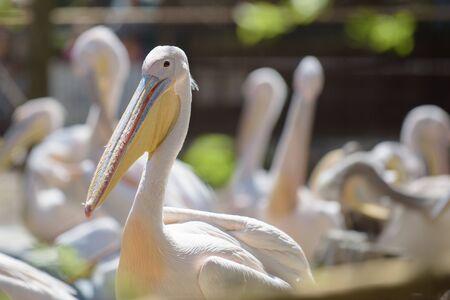 Pelicans enjoying the summer sun