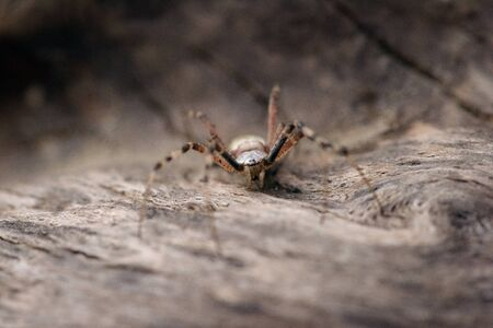 wood spider: Small colorful spider on a piece of wood  close up