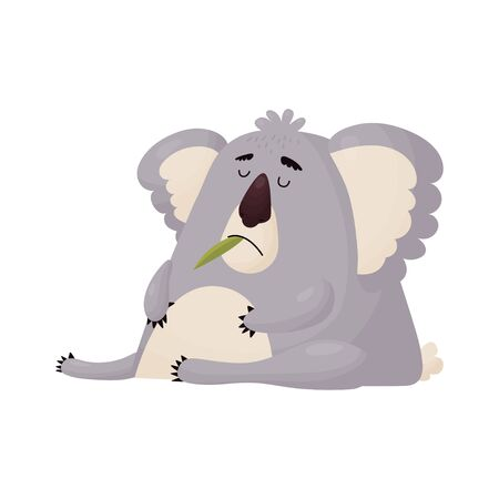 Funny Koala ate too much leaves and dozed off. Vector cute animal in cartoon style .