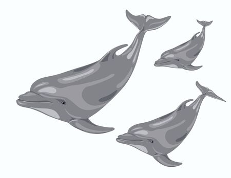 illustration of   three dolphins in the sea