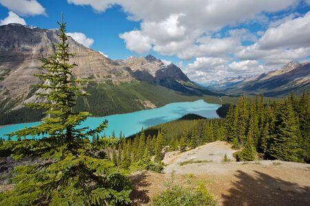 Peyto Lake in the Canadian Rockies