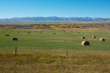 Hay crop and the Livingstone Range in Alberta, Canada Stock Photo