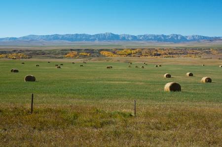 Hay crop and the Livingstone Range in Alberta, Canada Stock Photo