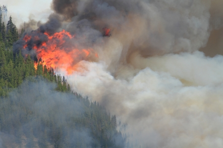 conflagration: Huge flames burning coniferous trees in the forests of the Rocky Mountains