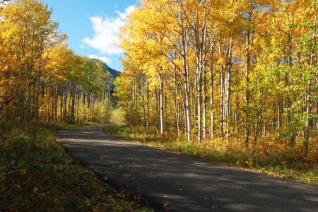 aspen leaf: Autumn Poplar Aspen trees in the Rocky Mountains with road Stock Photo