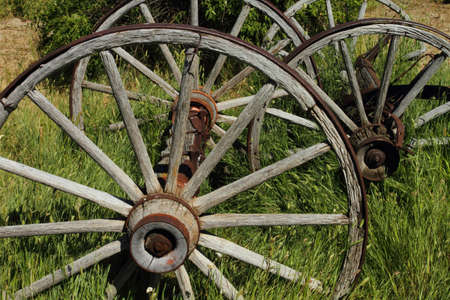 Old wagon wheels standing in the grass