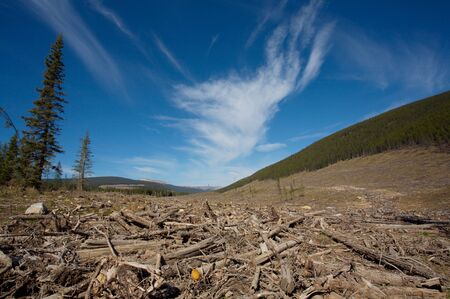 Clear cut logging area in the Rocky Mountains of Alberta, Canada