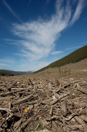 Clear cut logging area in the Rocky Mountains of Alberta photo