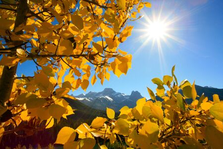 Fall aspen poplar leaves with Mount Lougheed in the Rocky Mountains of Canada Stock Photo