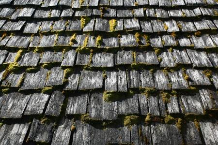cedro: El musgo cubrió las tejas del techo