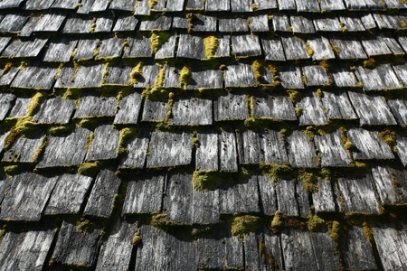 roof shingles: Moss covered roof shingles