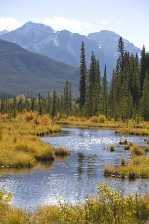 Marsh area of the Vermilion Lakes in Banff National Park, Rocky Mountains of Canada