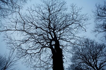 Trees and branches with evening sky