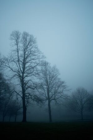 Trees in a foggy city park in the evening