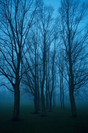 Trees in a city park on a dark foggy evening Stock Photo