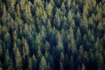 mountainside: Trees on a mountainside