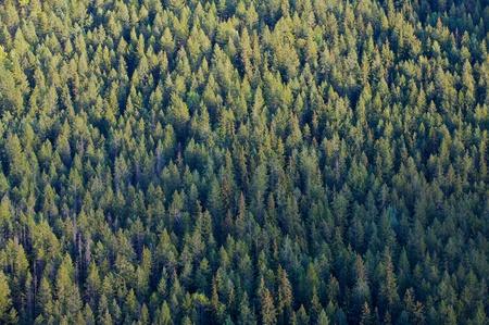 Trees on a mountainside