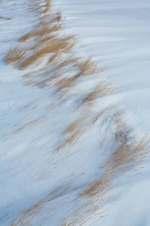 Dry winter grass and drifted snow photo