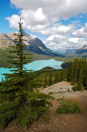Peyto Lake in Banff National Park, Alberta, Canada Stock Photo